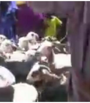 1200 moutons convoyées par des opérateurs mauritaniens vers la région de Matam