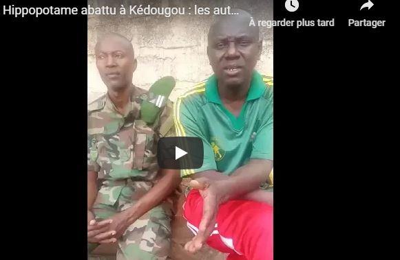Hippopotame abattu à Kédougou : les autorités s'expliquent