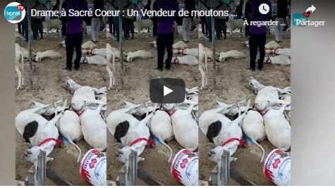 Drame à Sacré-Coeur : Des moutons de Tabaski meurent par intoxication alimentaire