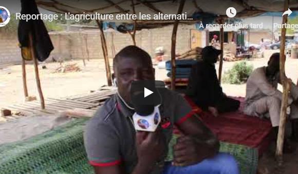 (Vidéo)Reportage : L'agriculture entre les alternatives politiques et la réalité dans la Région des Niayes