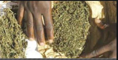 Un artiste arrêté pour trafic de drogue aux parcelles assainies